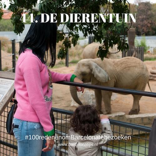 44-de-dierentuin