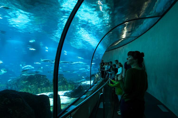 aquarium van barcelona